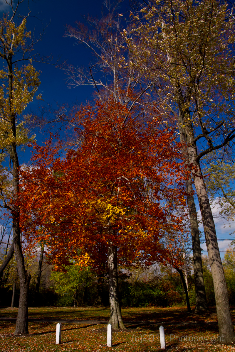 Fall Colors 2011 1